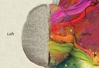 L'emisfero cerebrale sinistro è la sede della logica, nell'emisfero cerebrale destro risiede la creatività